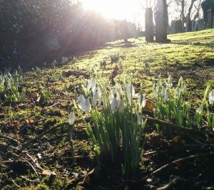 First snowdrops at Rathen